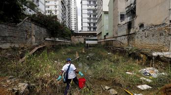 Egészségügyi Világszervezet: nem gond a zika, lesz olimpia