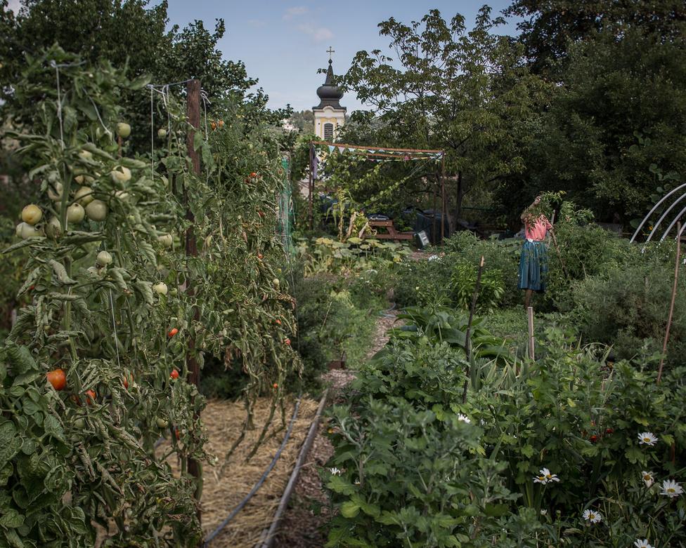 Óbor-kör Egyesület kertje Óbuda