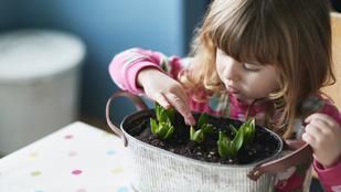 Jól válassza meg a vetőmagot, hagymát, vagy palántát, amit vesz, hogy növény is legyen belőle!