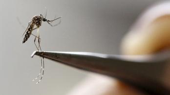 Csehországba is betört a zikavírus