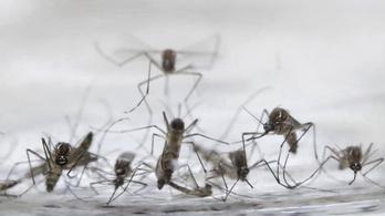 Egyre közelebb a zika: Szlovákiába is bevitték