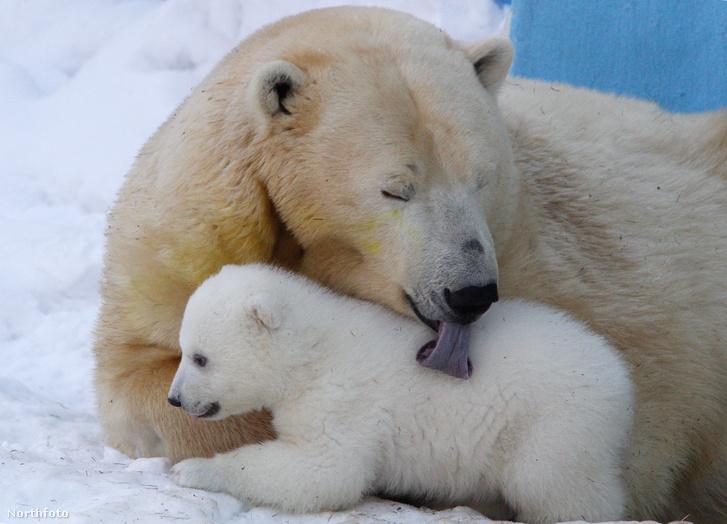 tk3s bm newborn polarbear 02449253