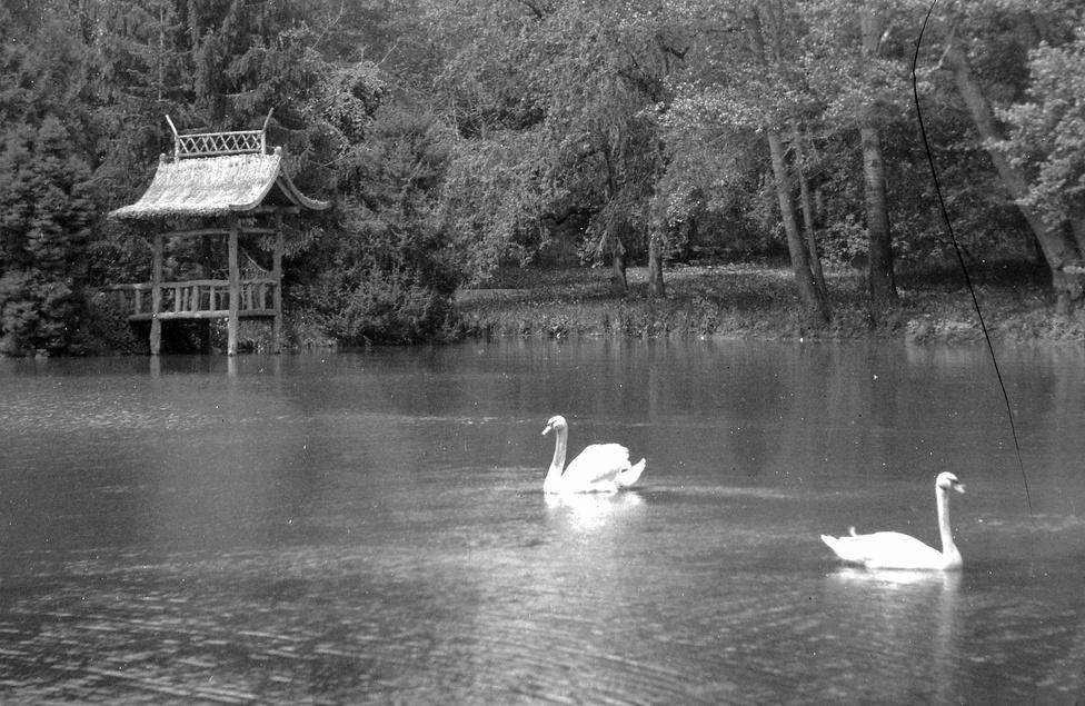 A Zichyknek kastélyaik voltak többek között Soponyán, Seregélyesen, Nagyhörcsökpusztán, Nagyvázsonyban, és Féltornyon. A képen a klasszicista soponyai kastély parkjában létesített mesterséges tó, természetes hattyúkkal.