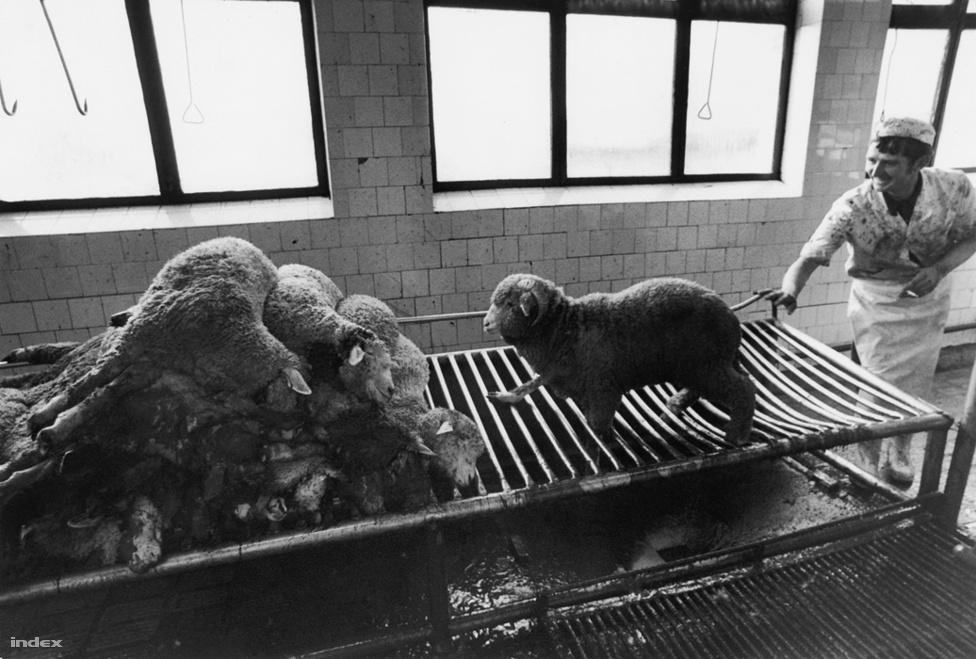 Export húsüzem, 1978.