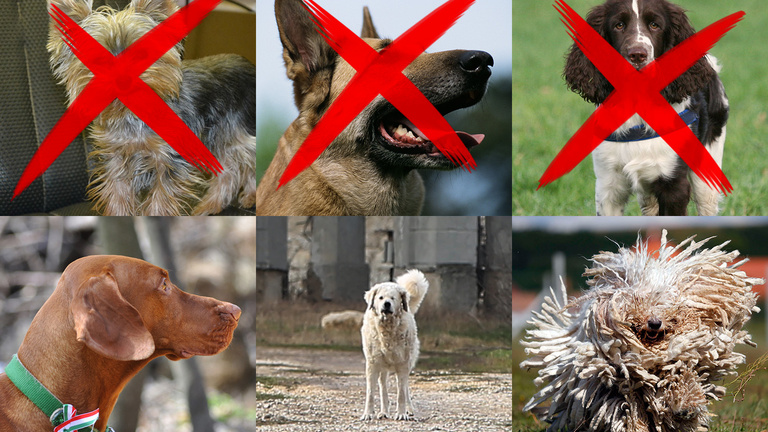 A kormány ejti az összes nemzetidegen kutyafajtát