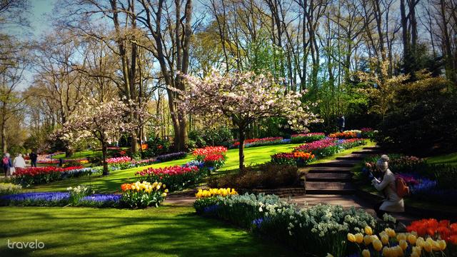 Tulipán-ágyások a Keukenhof kertben
