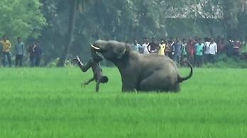 Indiában öt áldozata van az elefántok rohamának