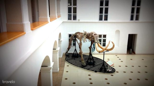 A gyöngyösi mamut