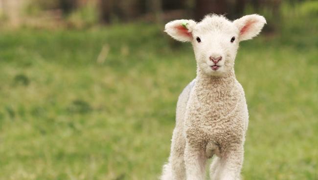 Tojáslabirintussal várja a húsvétozókat a szentendrei skanzen