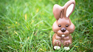 Mit tojjon a nyúl húsvétra? Akciós játékot, parfümöt és könyvet!