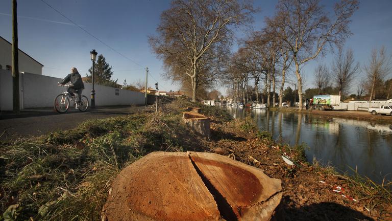 Szokjon hozzá a fák nélküli városképhez