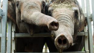 Válóok: dagadt elefántnak hívta házastársát