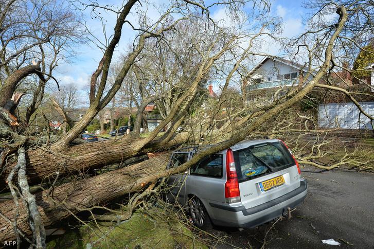 Brightonban fákat csavart ki a szél