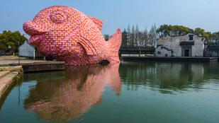 Óriási rózsaszín hal bukkant fel Kínában