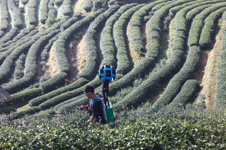 2000 Tea Plantation in Ang Khang Royal project