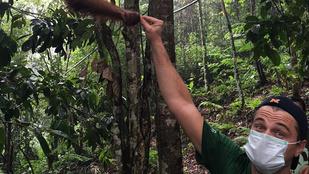 Leonardo DiCaprio és mentett kisorangután: TÖKÉLETESSÉG