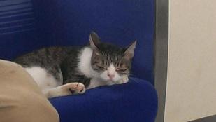 A 3-as metróra is kellene egy ilyen macska