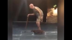 Hüppögteti az internetet a bácsitempóban sétáló kutya