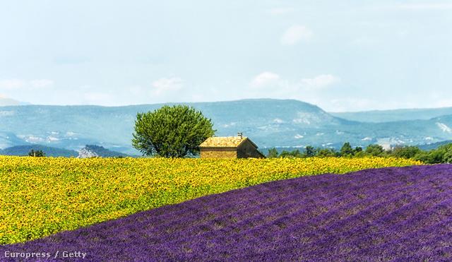Levendulamező, Provence, Franciaország