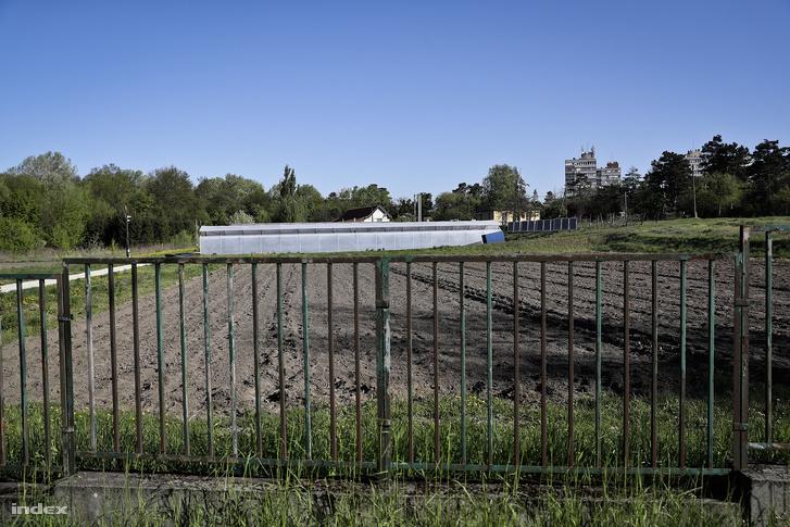 Az egyetem kertészeti tanüzeme. A kormány ide akarja az 50 méteres versenyuszodát