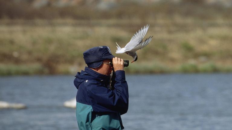 A mobilapp, amivel felismerheti a madarakat