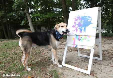 bm paintdog efg11059 10