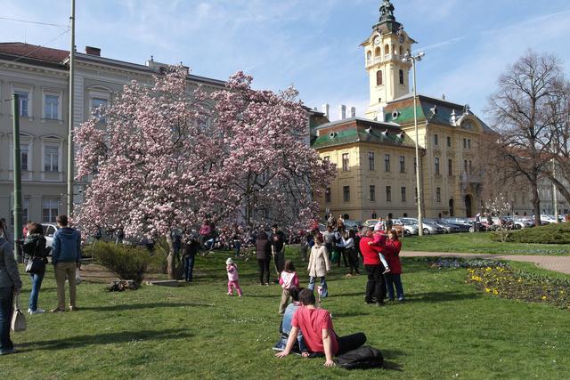 A szegedi Városháza előtti park tavasszal