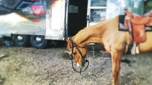 Channing Tatum egy lóval gazdagodott születésnapján