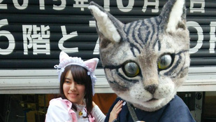Nagyon bizarr macskafejeket gyártanak Japánban