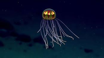 Gyönyörű medúzát találtak az óceán mélyén