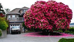 A világ 10 leggyönyörűbb tavaszi fája!