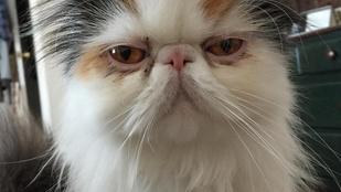 A világ legkeményebb jógaedzője egy macska