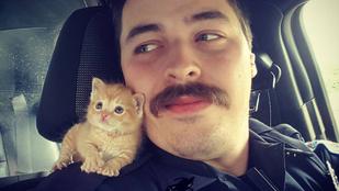 A megmentőjével járőröző cicánál cukibbat elképzelni sem lehet