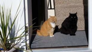 Ez egy macska és az árnyéka...vagy mégsem?