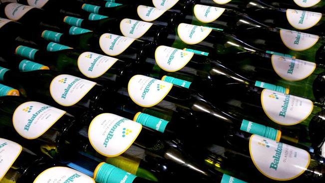 24 pincében készülhet idén olaszrizlingből BalatonBor