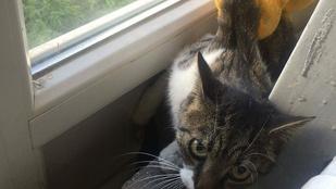 Visszanyerte szabadságát a két emelet közé szorult cica