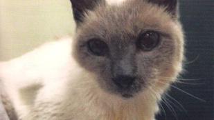Meghalt a világ legidősebb macskája