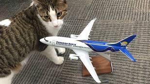 Légitársaságnál épít karriert a kanadai tűzből mentett macska