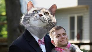 Mémesítették a fiút, aki macskáját vitte el az iskolai bálba