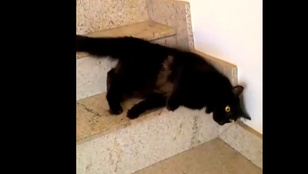 Látott már lépcsőről lefolyó macskát?