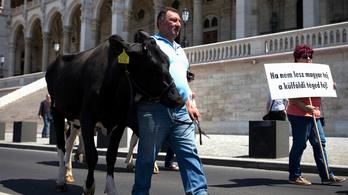 A kormány igyekszik megnyugtatni a dühös tejtermelőket