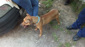Kutyát mentettek a felforrósodott autóból
