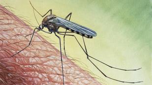 Teszt: Ennyit érnek a szúnyog- és kullancsriasztók