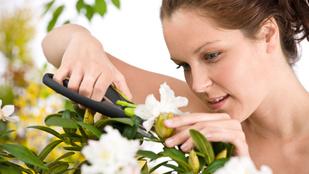 A rododendronnal sok dolga lesz, de megéri!