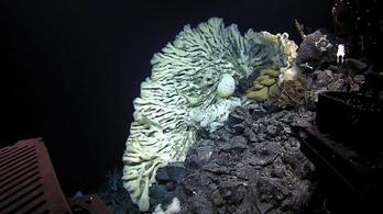 A világ legnagyobb tengeri szivacsára bukkantak Hawaii környékén