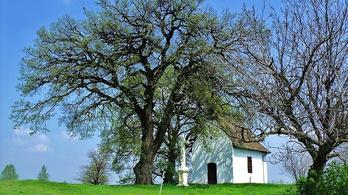 Magyar tudósok jöttek rá, hogy a fák is alszanak