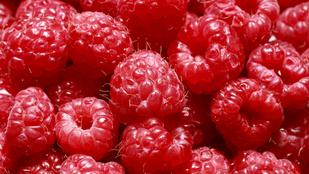 Házi gyümölcsöt szeretne, de gyorsan? Ültessen málnát!