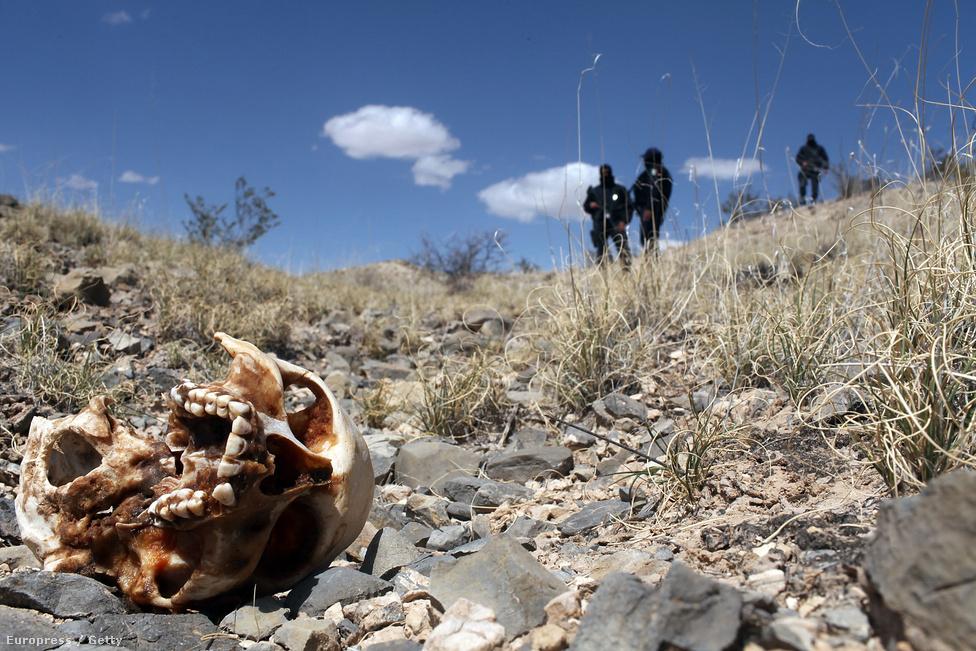 """Mexikói rendőrök állnak egy koponya mellett a határ menti Juarez város közelében. Egy hatalmas sivatagi temetőre gyanakszanak, amit vélhetően a drogháború áldozatainak tartanak fent. 2010-ben 100 ezer lakosra 173 gyilkosság jutott. 2016-ban a legveszélyesebb városnak tartott venezuelai Caracasban ez a szám """"csak"""" 120."""