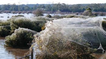 Pókok tízezrei estek az égből Tasmániában