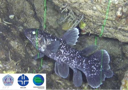 Coelacantha